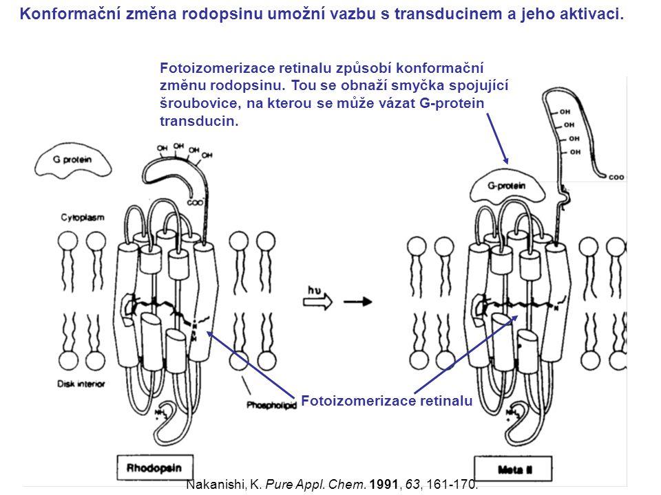 Konformační změna rodopsinu umožní vazbu s transducinem a jeho aktivaci. Fotoizomerizace retinalu Fotoizomerizace retinalu způsobí konformační změnu r