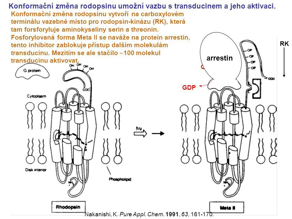 Konformační změna rodopsinu umožní vazbu s transducinem a jeho aktivaci. RK Nakanishi, K. Pure Appl. Chem. 1991, 63, 161-170. Konformační změna rodops