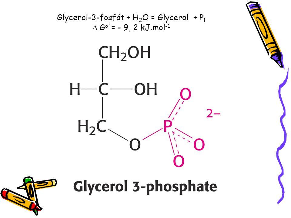 Glycerol-3-fosfát + H 2 O = Glycerol + P i  G o´ = - 9, 2 kJ.mol -1