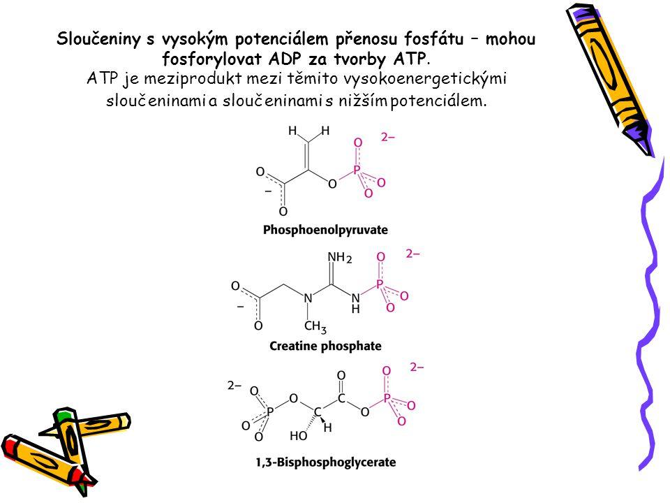 Sloučeniny s vysokým potenciálem přenosu fosfátu – mohou fosforylovat ADP za tvorby ATP. ATP je meziprodukt mezi těmito vysokoenergetickými sloučenina