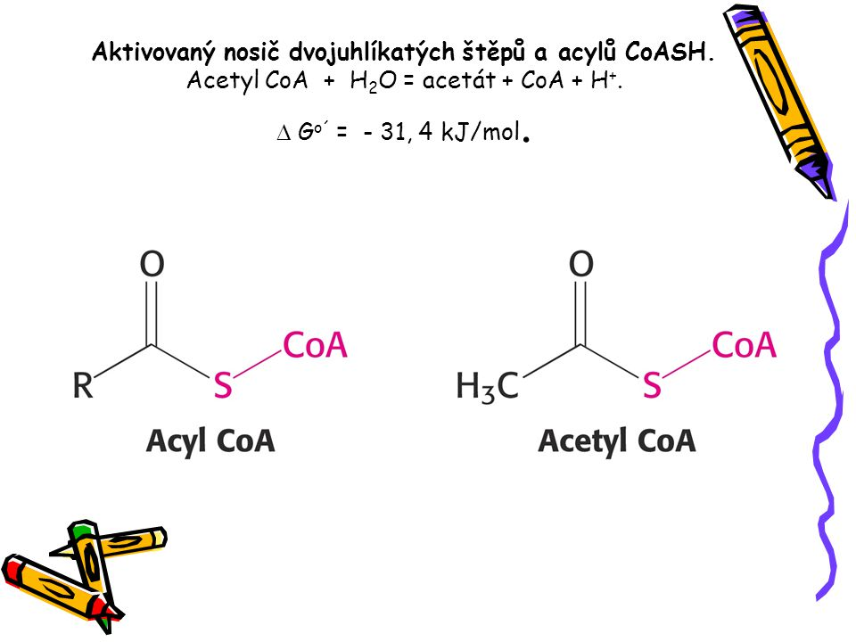 Aktivovaný nosič dvojuhlíkatých štěpů a acylů CoASH. Acetyl CoA + H 2 O = acetát + CoA + H +.  G o´ = - 31, 4 kJ/mol.