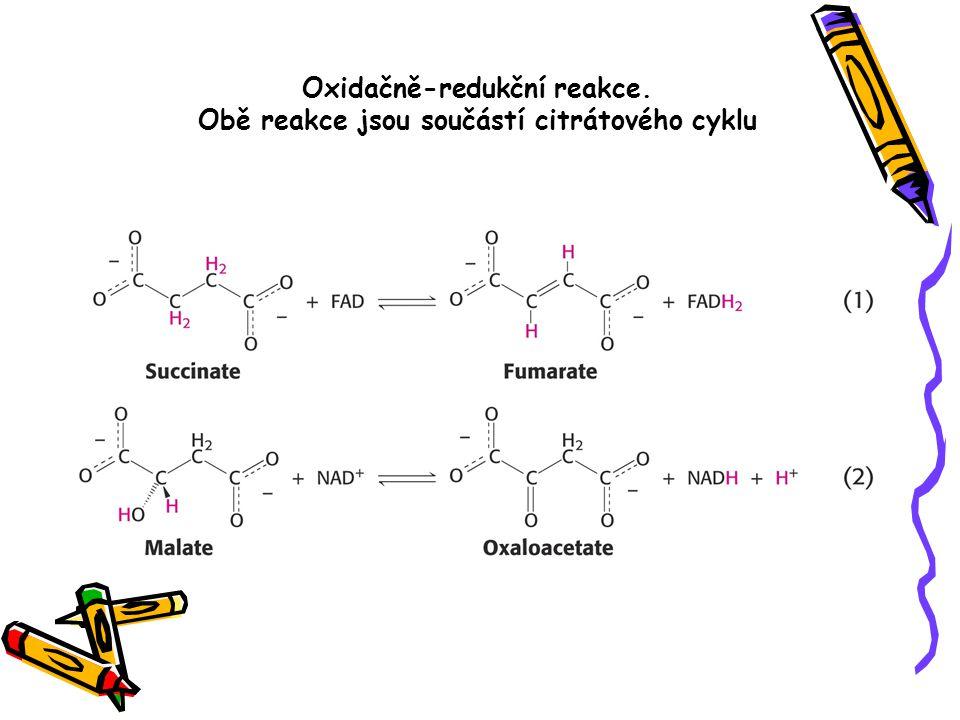 Oxidačně-redukční reakce. Obě reakce jsou součástí citrátového cyklu