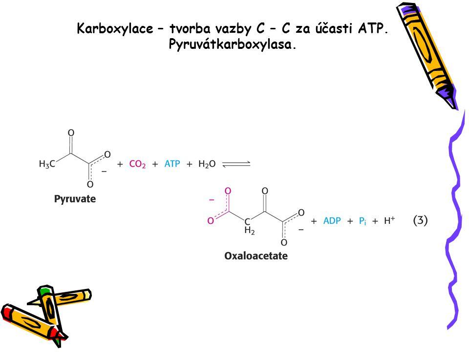 Karboxylace – tvorba vazby C – C za účasti ATP. Pyruvátkarboxylasa.