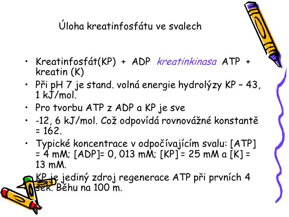 Úloha kreatinfosfátu ve svalech Kreatinfosfát(KP) + ADP kreatinkinasa ATP + kreatin (K) Při pH 7 je stand. volná energie hydrolýzy KP – 43, 1 kJ/mol.