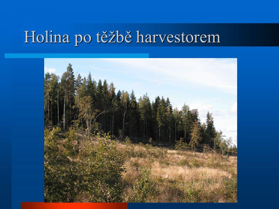 Holina po těžbě harvestorem