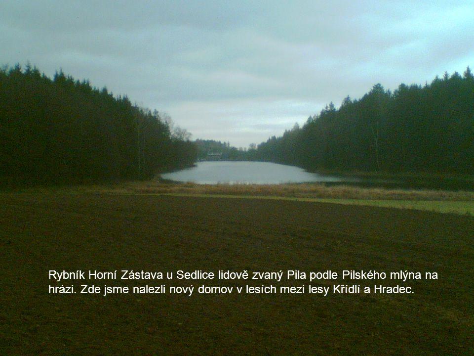 Rybník Horní Zástava u Sedlice lidově zvaný Pila podle Pilského mlýna na hrázi.