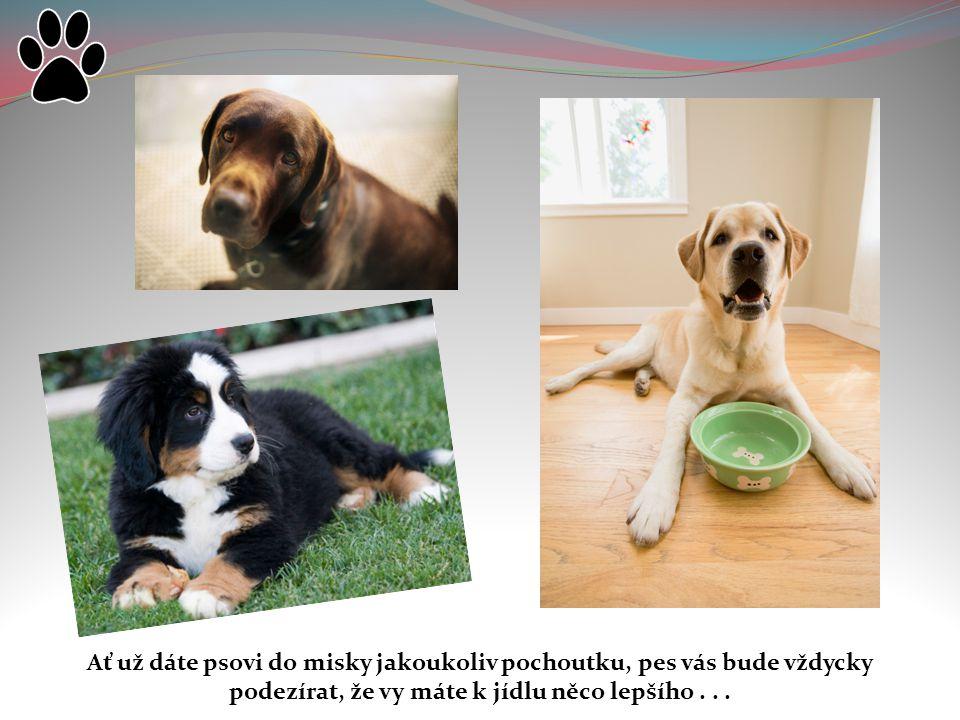 Ať už dáte psovi do misky jakoukoliv pochoutku, pes vás bude vždycky podezírat, že vy máte k jídlu něco lepšího...
