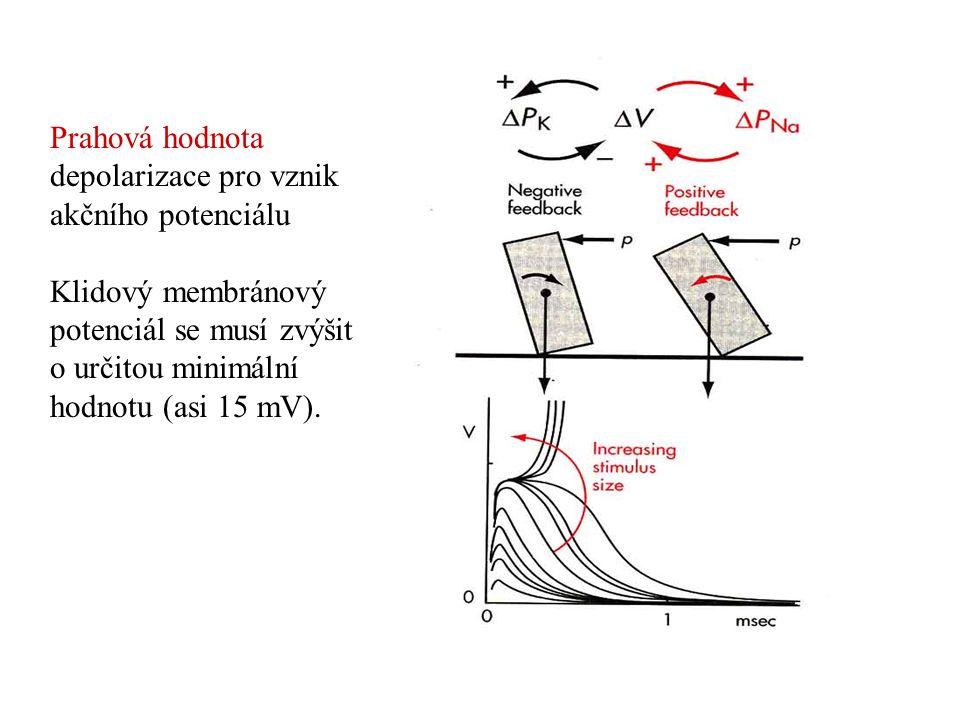 Prahová hodnota depolarizace pro vznik akčního potenciálu Klidový membránový potenciál se musí zvýšit o určitou minimální hodnotu (asi 15 mV).