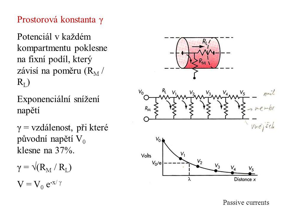 Prostorová konstanta γ Potenciál v každém kompartmentu poklesne na fixní podíl, který závisí na poměru (R M / R L ) Exponenciální snížení napětí γ = v