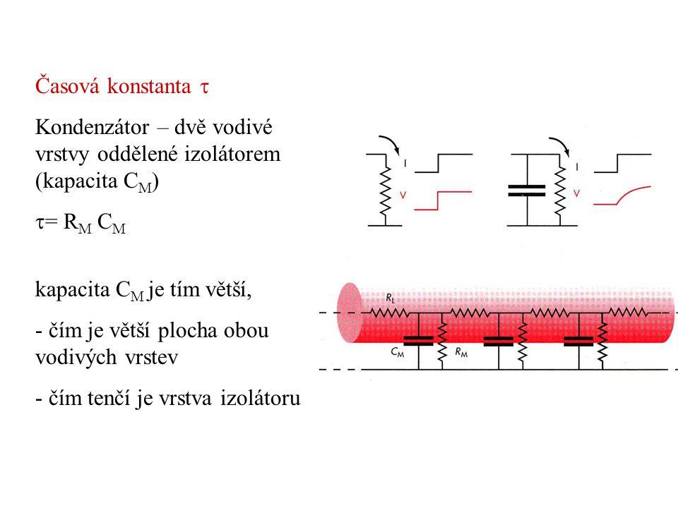 Jestliže se tloušťka vlákna zdvojnásobí - plocha membrány se zdvojnásobí - celkový odpor se sníží na polovinu -celková kapacita se zdvojnásobí Časová konstanta  = R M C M se nezmění Jestliže dojde k myelinizaci Zvýšení odporu membrány R M Zmenšení kapacity membrány C M Časová konstanta  = R M C M se nezmění