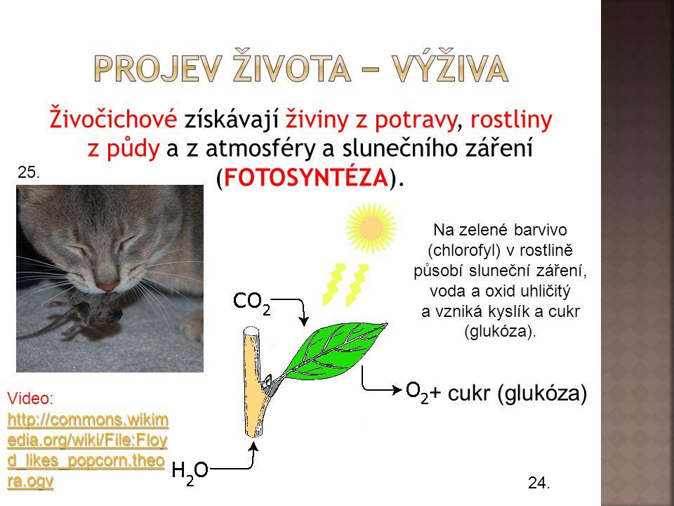 Vývoj určitého druhu organismů se nazývá evoluce. 23.