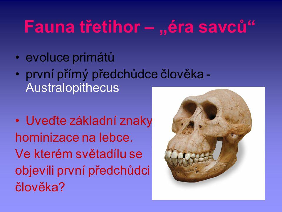 """Fauna třetihor – """"éra savců"""" evoluce primátů první přímý předchůdce člověka - Australopithecus Uveďte základní znaky hominizace na lebce. Ve kterém sv"""