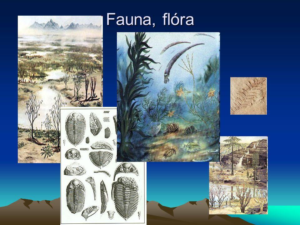 prvohory Fauna: hmyz, krytolebci…