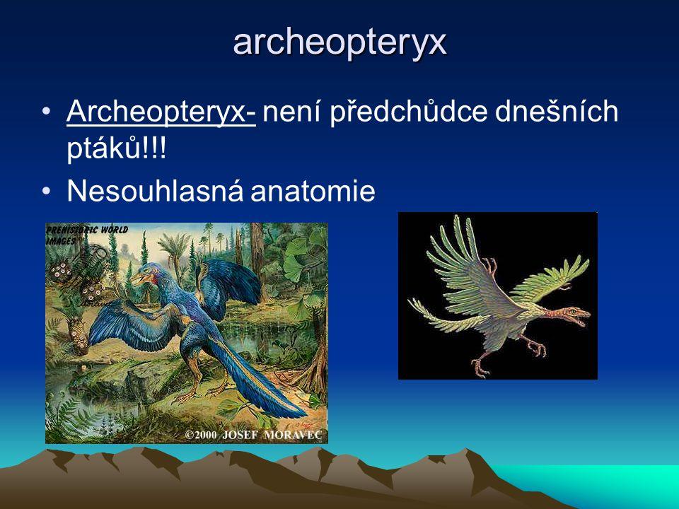 Třetihory(=terciér) 63 miliónů let, patří do dlouhého kenozoika( období pro třetihory a čtvrtohory) Paleocén Eocén Oligocén Miocén Pliocén