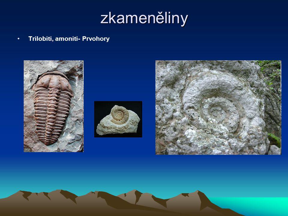 zkameněliny Předchůdce netopýta