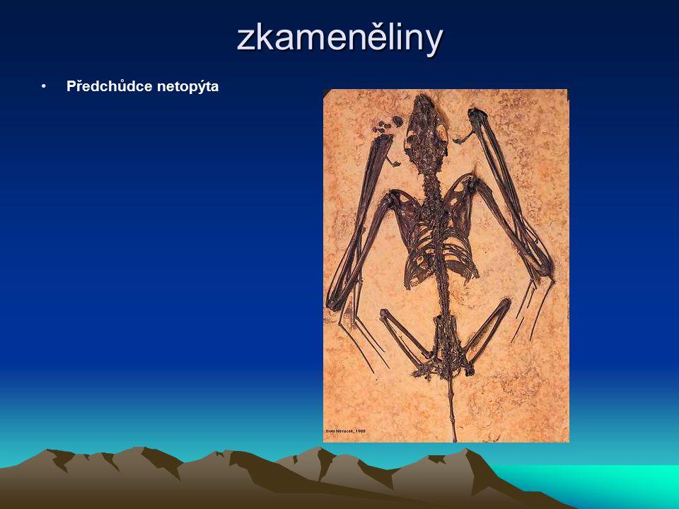 zkameněliny Hmyz v jantaru