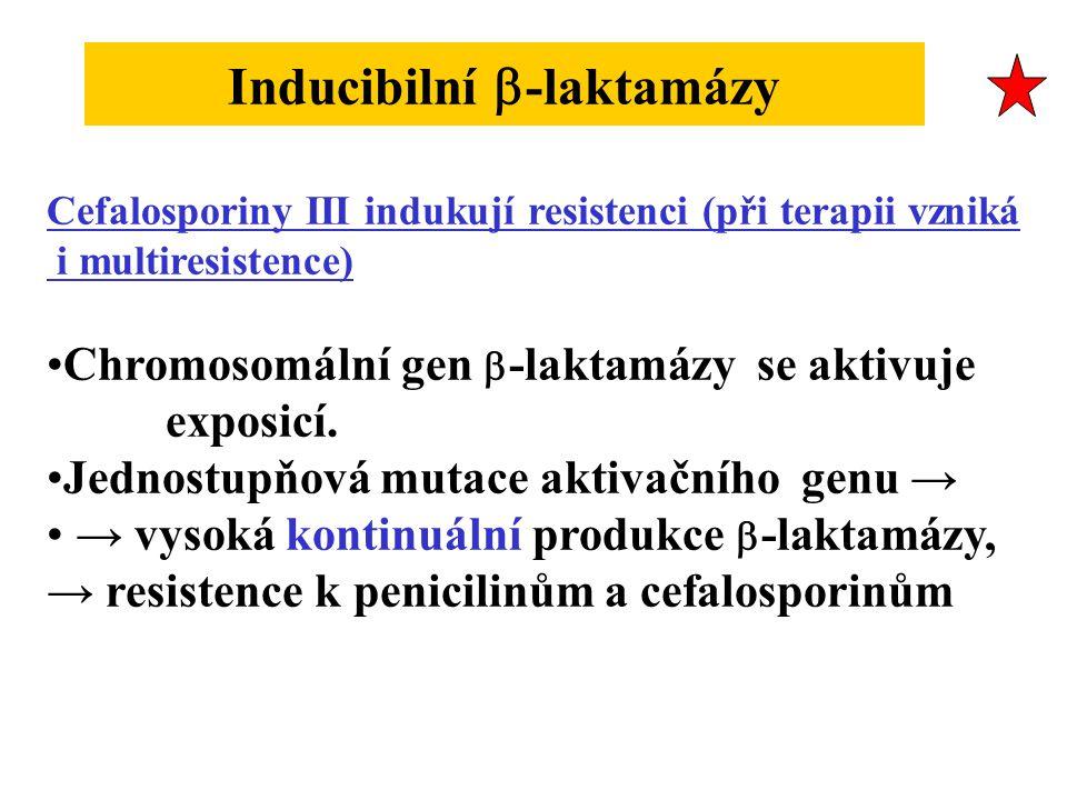 Inducibilní  -laktamázy Cefalosporiny III indukují resistenci (při terapii vzniká i multiresistence) Chromosomální gen  -laktamázy se aktivuje exposicí.