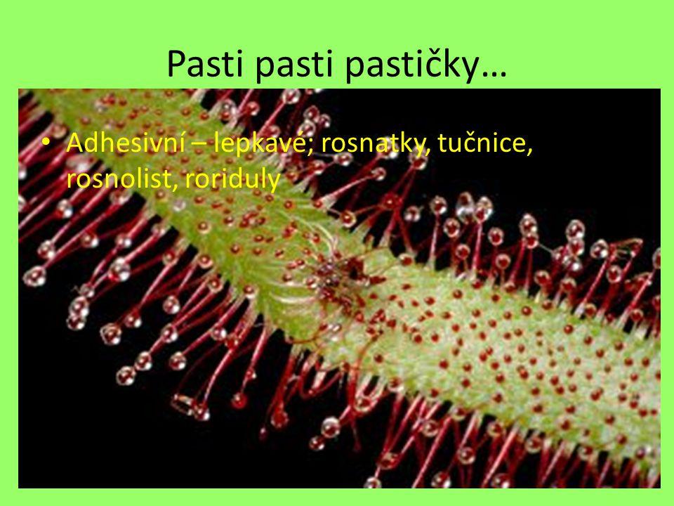Pasti pasti pastičky… Adhesivní – lepkavé; rosnatky, tučnice, rosnolist, roriduly