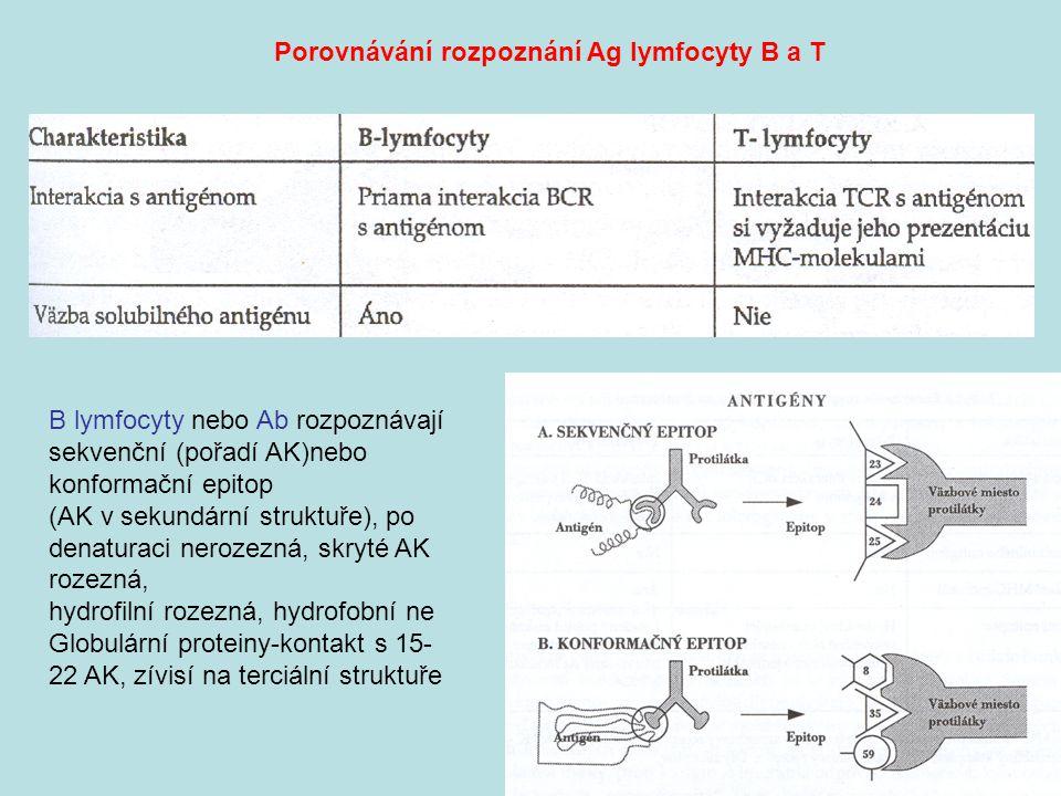 Porovnávání rozpoznání Ag lymfocyty B a T B lymfocyty nebo Ab rozpoznávají sekvenční (pořadí AK)nebo konformační epitop (AK v sekundární struktuře), po denaturaci nerozezná, skryté AK rozezná, hydrofilní rozezná, hydrofobní ne Globulární proteiny-kontakt s 15- 22 AK, zívisí na terciální struktuře