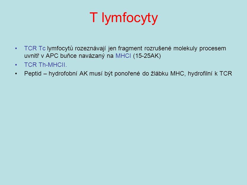 T lymfocyty TCR Tc lymfocytů rozeznávají jen fragment rozrušené molekuly procesem uvnitř v APC buňce navázaný na MHCI (15-25AK) TCR Th-MHCII. Peptid –