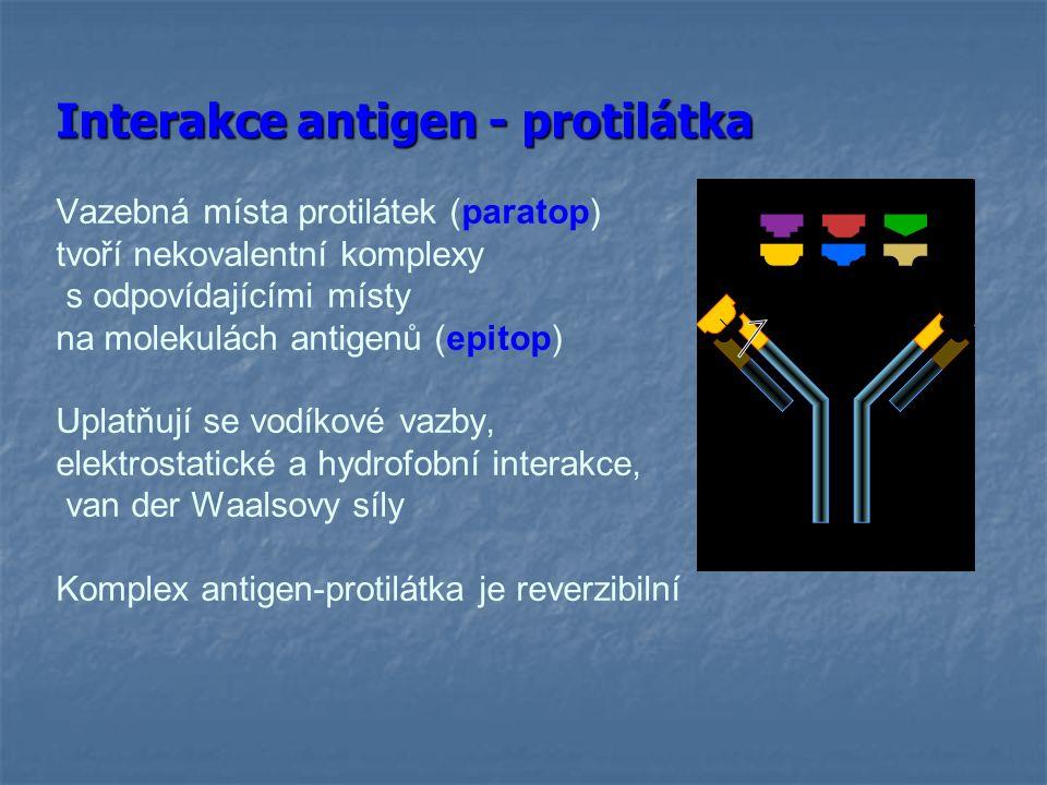 Typy antigenů z hlediska prezentace antigenů 1) Typy antigenů z hlediska prezentace antigenů 1) thymus dependentní antigeny Častější, jde o většinu proteinových Ag Specifická humorální imunitní odpověď na antigen vyžaduje spolupráci s T H lymfocyty, jinak není dost efektivní Pomoc realizována ve formě cytokinů secernovaných T H lymfocyty