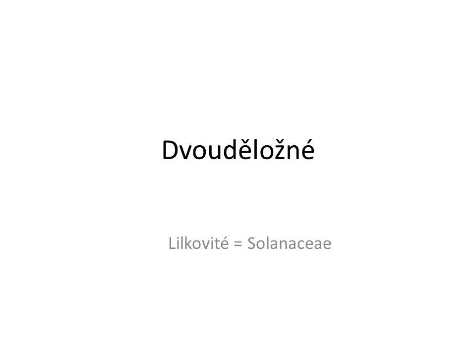 Dvouděložné Lilkovité = Solanaceae