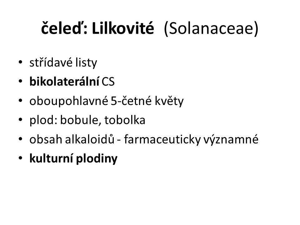 čeleď: Lilkovité (Solanaceae) střídavé listy bikolaterální CS oboupohlavné 5-četné květy plod: bobule, tobolka obsah alkaloidů - farmaceuticky významné kulturní plodiny