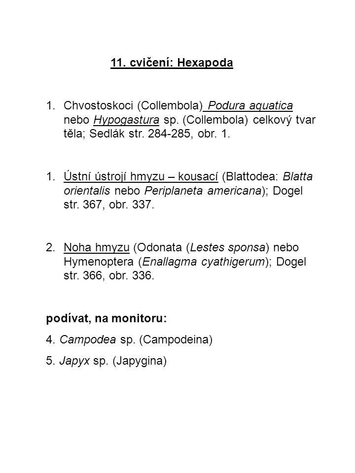 11. cvičení: Hexapoda 1.Chvostoskoci (Collembola) Podura aquatica nebo Hypogastura sp. (Collembola) celkový tvar těla; Sedlák str. 284-285, obr. 1. 1.