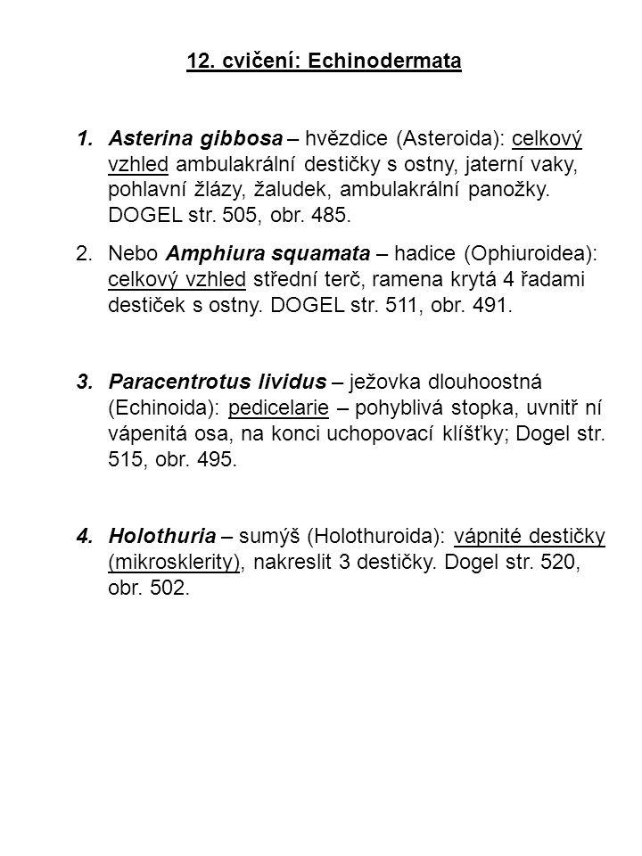 12. cvičení: Echinodermata 1.Asterina gibbosa – hvězdice (Asteroida): celkový vzhled ambulakrální destičky s ostny, jaterní vaky, pohlavní žlázy, žalu