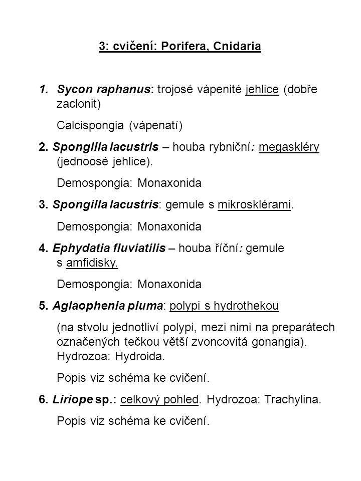 3: cvičení: Porifera, Cnidaria 1.Sycon raphanus: trojosé vápenité jehlice (dobře zaclonit) Calcispongia (vápenatí) 2. Spongilla lacustris – houba rybn