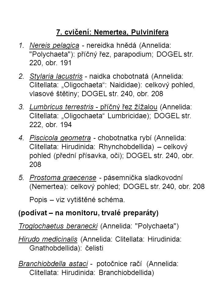 7. cvičení: Nemertea, Pulvinifera 1.Nereis pelagica - nereidka hnědá (Annelida: