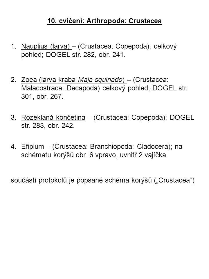 10. cvičení: Arthropoda: Crustacea 1.Nauplius (larva) – (Crustacea: Copepoda); celkový pohled; DOGEL str. 282, obr. 241. 2.Zoea (larva kraba Maja squi