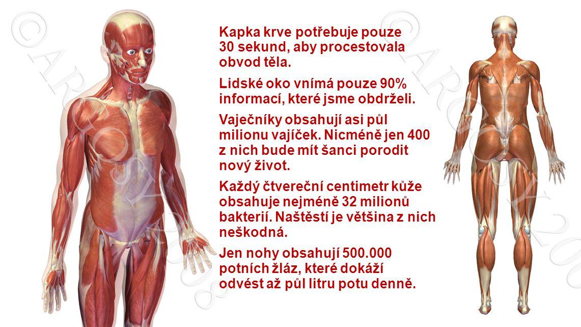 Největší orgán lidského těla je kůže.Je to plocha o rozloze 1,9 m2, která by vám umožnila létat.