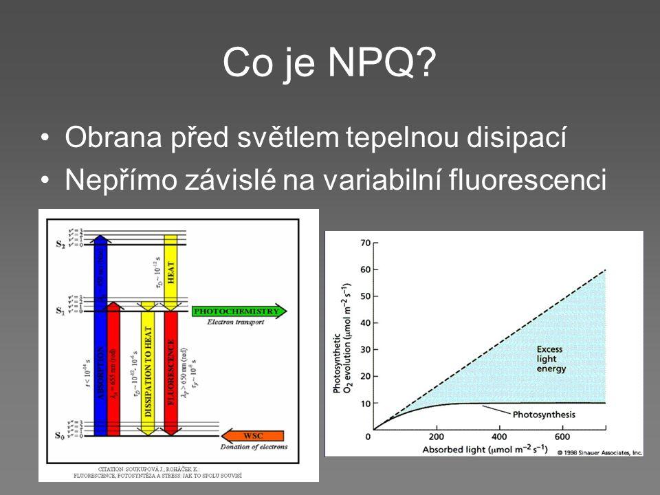 Co je NPQ? Obrana před světlem tepelnou disipací Nepřímo závislé na variabilní fluorescenci