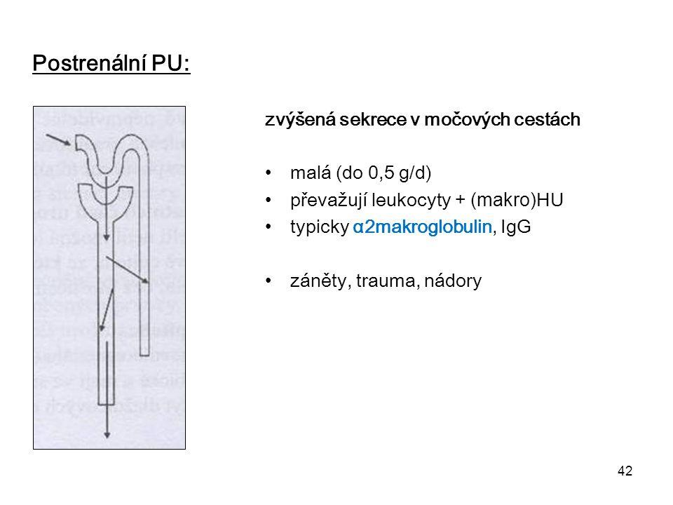 42 Postrenální PU: zvýšená sekrece v močových cestách malá (do 0,5 g/d) převažují leukocyty + (makro) HU typicky α2makroglobulin, IgG záněty, trauma,