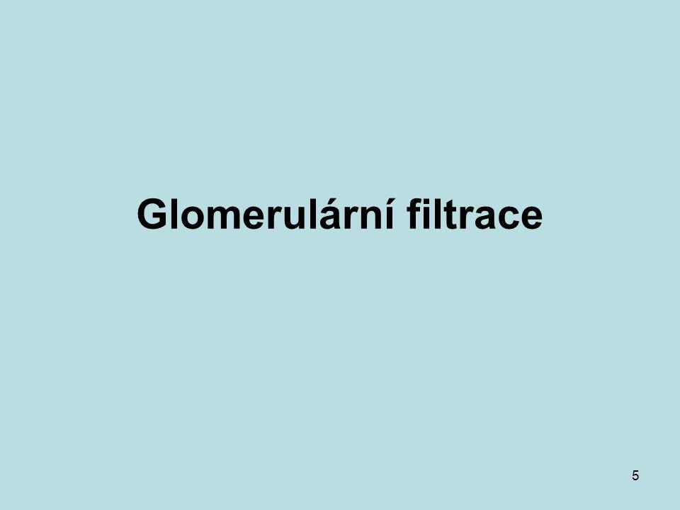 5 Glomerulární filtrace