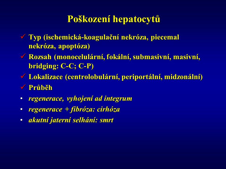 Poškození hepatocytů Typ (ischemická-koagulační nekróza, piecemal nekróza, apoptóza) Typ (ischemická-koagulační nekróza, piecemal nekróza, apoptóza) Rozsah (monocelulární, fokální, submasivní, masivní, bridging: C-C; C-P) Rozsah (monocelulární, fokální, submasivní, masivní, bridging: C-C; C-P) Lokalizace (centrolobulární, periportální, midzonální) Lokalizace (centrolobulární, periportální, midzonální) Průběh Průběh regenerace, vyhojení ad integrumregenerace, vyhojení ad integrum regenerace + fibróza: cirhózaregenerace + fibróza: cirhóza akutní jaterní selhání: smrtakutní jaterní selhání: smrt