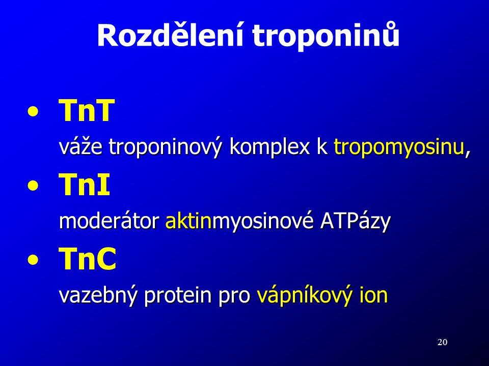 20 TnT váže troponinový komplex k tropomyosinu, TnI moderátor aktinmyosinové ATPázy TnC vazebný protein pro vápníkový ion Rozdělení troponinů