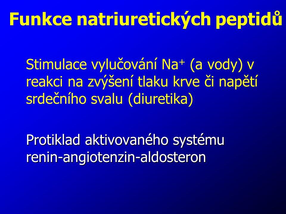 Funkce natriuretických peptidů Stimulace vylučování Na + (a vody) v reakci na zvýšení tlaku krve či napětí srdečního svalu (diuretika) Protiklad aktiv