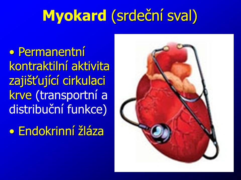 5 Permanentní kontraktilní aktivita zajišťující cirkulaci krve Permanentní kontraktilní aktivita zajišťující cirkulaci krve (transportní a distribuční