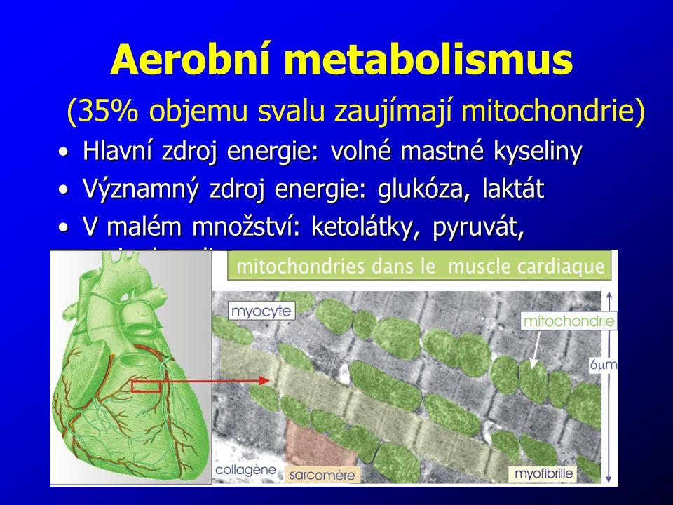 7 (35% objemu svalu zaujímají mitochondrie) Hlavní zdroj energie: volné mastné kyselinyHlavní zdroj energie: volné mastné kyseliny Významný zdroj ener