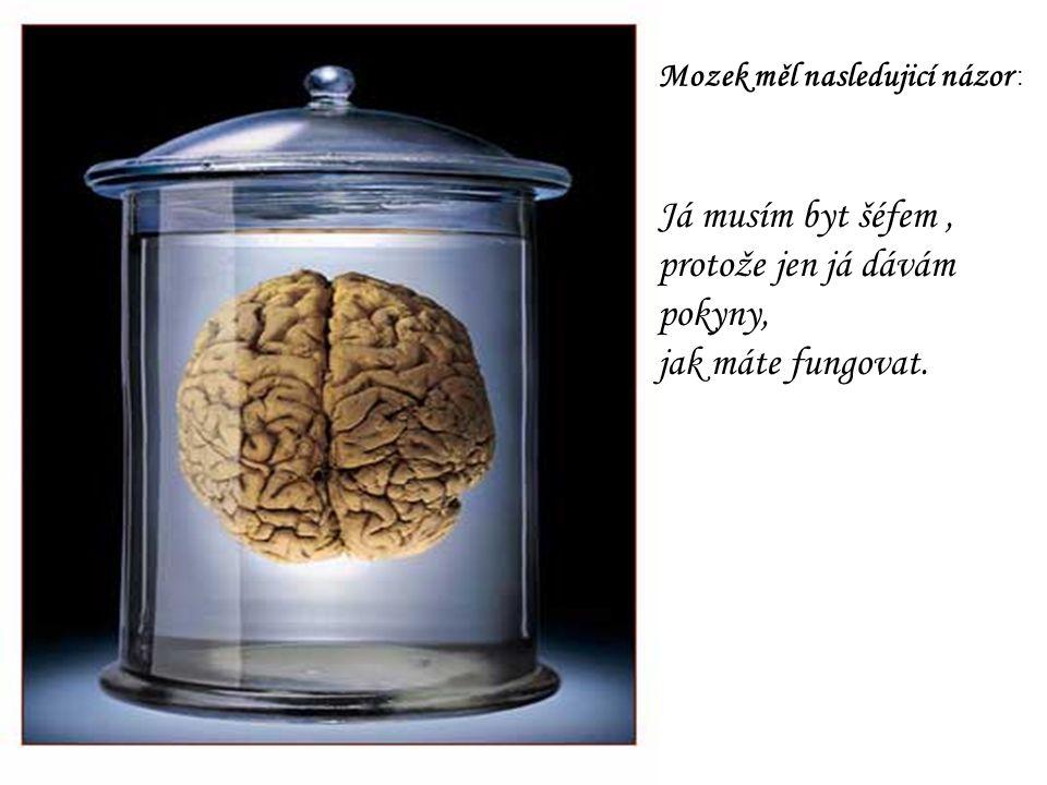 Mozek měl nasledujicí názor : Já musím byt šéfem, protože jen já dávám pokyny, jak máte fungovat.