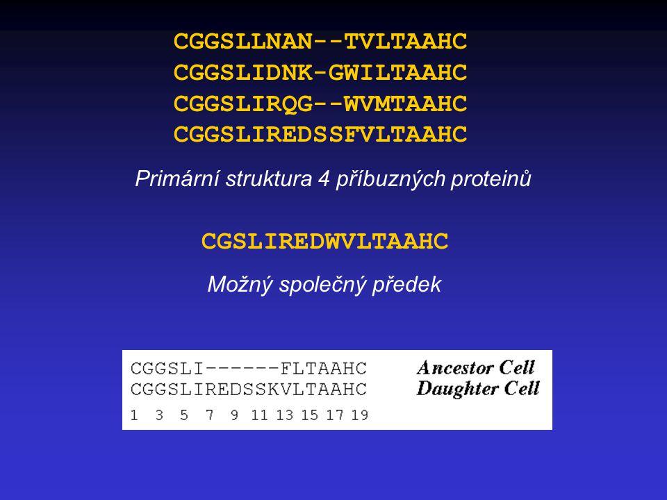 CGGSLLNAN--TVLTAAHC CGGSLIDNK-GWILTAAHC CGGSLIRQG--WVMTAAHC CGGSLIREDSSFVLTAAHC Primární struktura 4 příbuzných proteinů CGSLIREDWVLTAAHC Možný společný předek