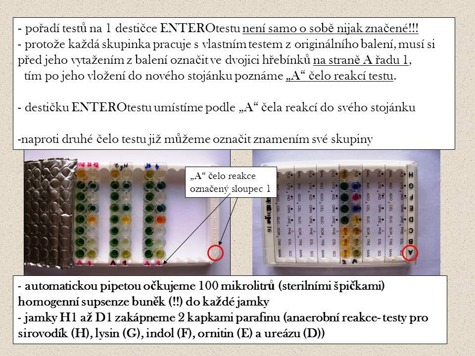 23 - automatickou pipetou o č kujeme 100 mikrolitr ů (sterilními špi č kami) homogenní supsenze bun ě k (!!) do ka ž dé jamky - jamky H1 a ž D1 zakápneme 2 kapkami parafinu (anaerobní reakce- testy pro sirovodík (H), lysin (G), indol (F), ornitin (E) a ureázu (D)) - po ř adí test ů na 1 desti č ce ENTEROtestu není samo o sob ě nijak zna č ené!!.