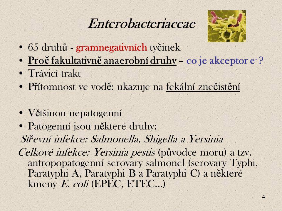 4 Enterobacteriaceae 65 druh ů - gramnegativních ty č inek Pro č fakultativn ě anaerobní druhy – co je akceptor e - .