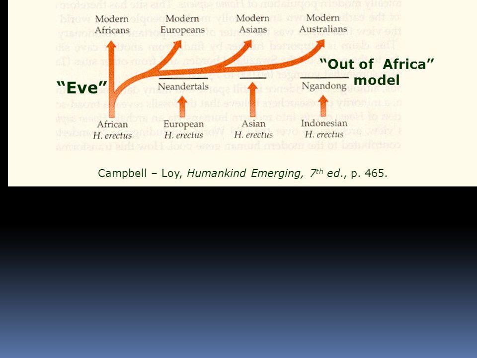  Počet zděděných mutací, které se dostávaly do genomu, jak se lidstvo rozšiřovalo po světě, ukazuje, že:  mužský strom má svůj kořen v centrální Africe před 100 000 lety.