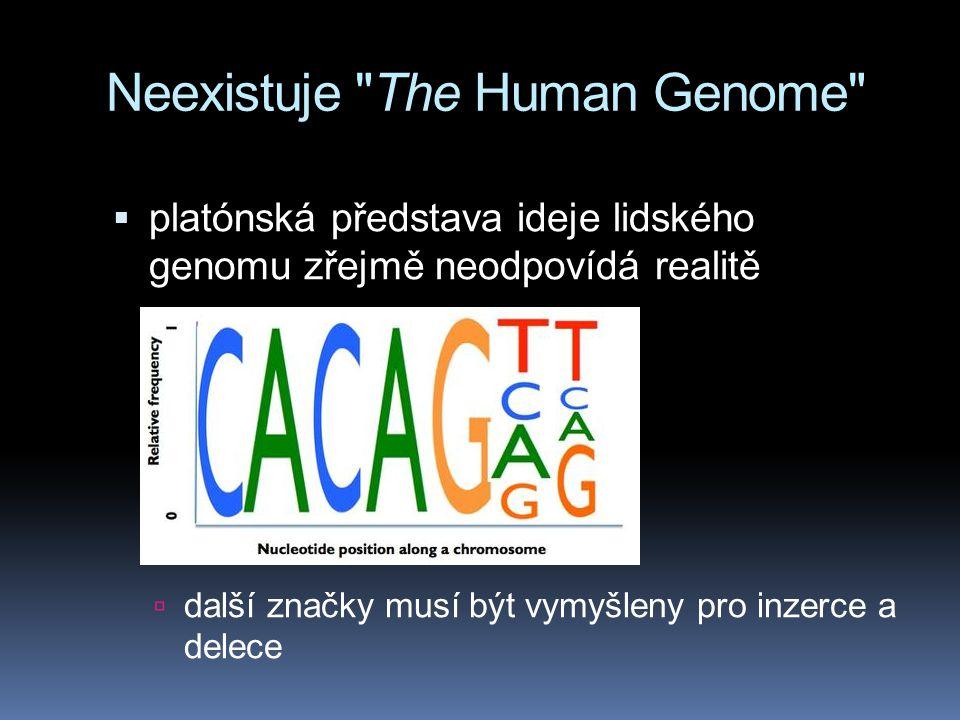 Genom šimpanze a člověka