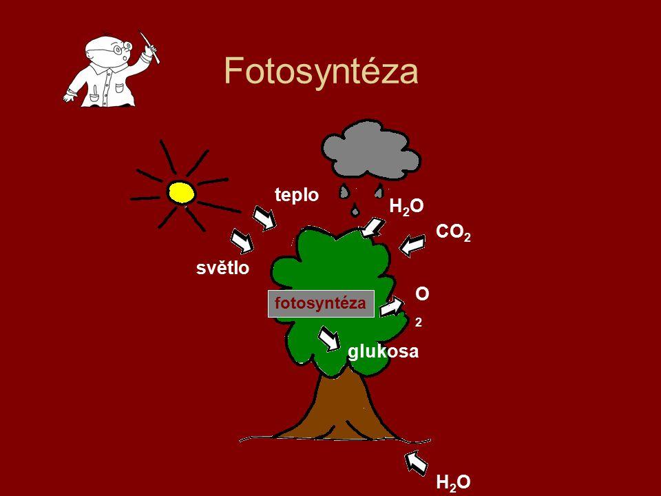 Fotosyntéza teplo světlo H2OH2O CO 2 O2O2 glukosa H2OH2O fotosyntéza