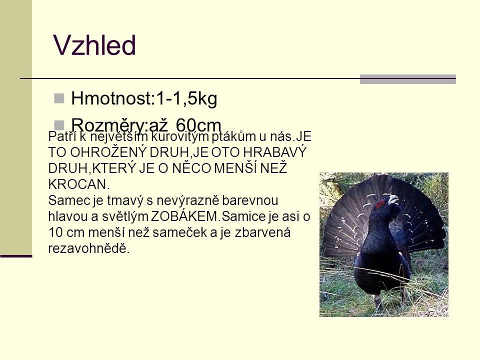 Vzhled Hmotnost:1-1,5kg Rozměry:až 60cm Patří k největším kurovitým ptákům u nás.JE TO OHROŽENÝ DRUH,JE OTO HRABAVÝ DRUH,KTERÝ JE O NĚCO MENŠÍ NEŽ KROCAN.