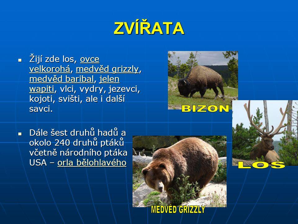 ZVÍŘATA Žijí zde los, ovce velkorohá, medvěd grizzly, medvěd baribal, jelen wapiti, vlci, vydry, jezevci, kojoti, svišti, ale i další savci. Žijí zde
